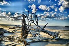 Νησί Jekyll παραλιών Driftwood, Γεωργία Στοκ φωτογραφίες με δικαίωμα ελεύθερης χρήσης