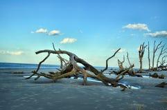 Νησί Jekyll παραλιών Driftwood, Γεωργία Στοκ Φωτογραφίες