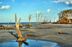 Νησί Jekyll παραλιών Driftwood, Γεωργία Στοκ Εικόνες