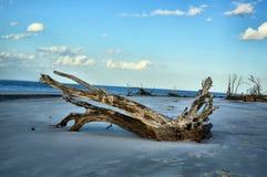Νησί Jekyll παραλιών Driftwood, Γεωργία Στοκ εικόνες με δικαίωμα ελεύθερης χρήσης