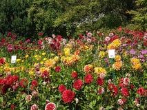 Νησί Mainau λουλουδιών Στοκ φωτογραφία με δικαίωμα ελεύθερης χρήσης