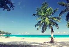 Νησί Praslin παραλιών του Λάτσιο Anse, Σεϋχέλλες Στοκ φωτογραφία με δικαίωμα ελεύθερης χρήσης