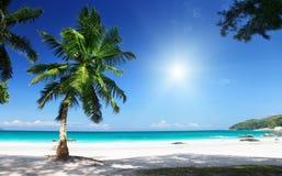 Νησί Praslin παραλιών του Λάτσιο Anse Στοκ Εικόνες