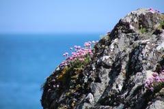 Νησί Skomer Στοκ φωτογραφία με δικαίωμα ελεύθερης χρήσης