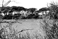 Νησιά Γαλλία Lérins Στοκ φωτογραφίες με δικαίωμα ελεύθερης χρήσης