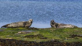 Νησιά Aran - Inishmore Στοκ Φωτογραφίες