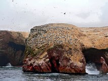 νησιά ballestas που βρίσκονται από τις ακτές του Περού paracas Στοκ εικόνα με δικαίωμα ελεύθερης χρήσης
