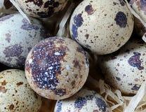 νησοπέρδικες αυγών ανασ&ka Στοκ φωτογραφία με δικαίωμα ελεύθερης χρήσης
