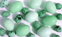 νησοπέρδικες αυγών κοτόπ&o Στοκ Εικόνες