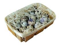 νησοπέρδικες αυγών συμπ&lam Στοκ φωτογραφία με δικαίωμα ελεύθερης χρήσης