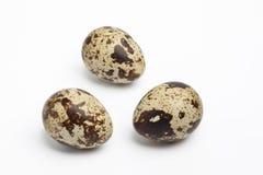 νησοπέρδικες αυγών τρία σύ& Στοκ Φωτογραφία