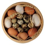νησοπέρδικες αυγών Στοκ εικόνες με δικαίωμα ελεύθερης χρήσης