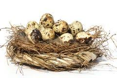 νησοπέρδικες αυγών Στοκ Εικόνες