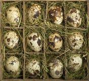 νησοπέρδικες αυγών Στοκ εικόνα με δικαίωμα ελεύθερης χρήσης