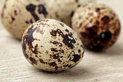 νησοπέρδικες αυγών Στοκ φωτογραφία με δικαίωμα ελεύθερης χρήσης