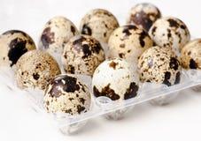 νησοπέρδικες αυγών Στοκ Εικόνα
