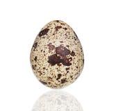 νησοπέρδικες αυγών ενιαί& Στοκ Εικόνα