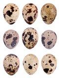 Νησοπέρδικες egg Στοκ φωτογραφία με δικαίωμα ελεύθερης χρήσης