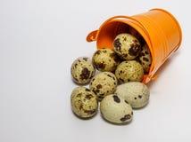 Νησοπέρδικες egg Στοκ Εικόνα