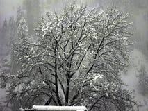 Νιφάδες χιονιού στο δέντρο στοκ φωτογραφία με δικαίωμα ελεύθερης χρήσης