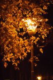 Νοέμβριος αυτό είναι ο αγαπημένος μήνας μου Στοκ εικόνα με δικαίωμα ελεύθερης χρήσης