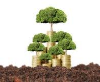 νομίσματα ανασκόπησης που αναπτύσσουν το απομονωμένο λευκό δέντρων χρημάτων Στοκ φωτογραφία με δικαίωμα ελεύθερης χρήσης