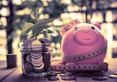 Νομίσματα αποταμίευσης για την επιχείρηση και τη χρηματοδότηση έννοιας επένδυσης Στοκ Εικόνες