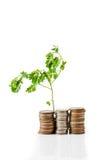 νομίσματα που αναπτύσσουν τις νεολαίες φυτών Στοκ Εικόνες