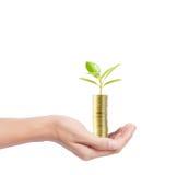 νομίσματα που αναπτύσσουν το δέντρο σωρών Στοκ φωτογραφία με δικαίωμα ελεύθερης χρήσης