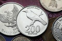 Νομίσματα της Ινδονησίας Στοκ εικόνες με δικαίωμα ελεύθερης χρήσης