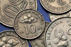 Νομίσματα της Μαλαισίας Στοκ Εικόνα