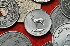 Νομίσματα των Ηνωμένων Αραβικών Εμιράτων Άμμος Gazelle στοκ εικόνες