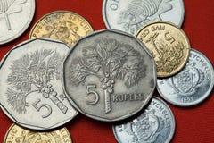 Νομίσματα των Σεϋχελλών φοίνικας nucifera cocos καρύδων στοκ εικόνες με δικαίωμα ελεύθερης χρήσης