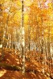 Νομός φθινοπώρου Στοκ Εικόνες
