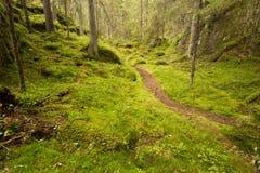 Νορβηγικός βαθύς - πράσινα ξύλα Στοκ φωτογραφία με δικαίωμα ελεύθερης χρήσης