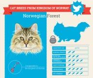Νορβηγικό δασικό infographics φυλής γατών ελεύθερη απεικόνιση δικαιώματος
