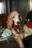 νοσοκομείο κτηνιατρικό Στοκ Φωτογραφίες