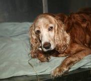 νοσοκομείο κτηνιατρικό Στοκ φωτογραφίες με δικαίωμα ελεύθερης χρήσης