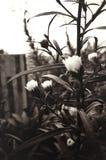 Νοσταλγία και ξεχασμένα λουλούδια στη σέπια στοκ εικόνες με δικαίωμα ελεύθερης χρήσης