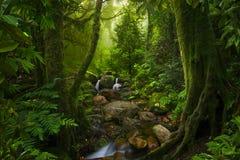 Νοτιοανατολική ασιατική βαθιά ζούγκλα στοκ εικόνα