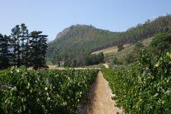 Νοτιοαφρικανικά αγροκτήματα κρασιού στοκ εικόνα με δικαίωμα ελεύθερης χρήσης