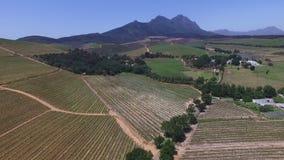 Νοτιοαφρικανικοί αμπελώνες απόθεμα βίντεο