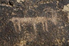 Νοτιοδυτικό Petroglyph του ζώου Στοκ εικόνα με δικαίωμα ελεύθερης χρήσης