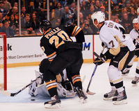 Ντάνιελ Paille, Boston Bruins Στοκ φωτογραφία με δικαίωμα ελεύθερης χρήσης