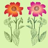 ντάλιες Διανυσματικό λουλούδι Στοκ Εικόνες