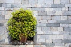 Ντεκόρ δέντρων στο γκρίζο υπόβαθρο brickwall Στοκ Εικόνες