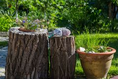 Ντεκόρ κήπων στοκ εικόνα