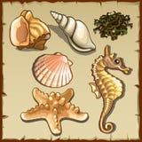 Ντεκόρ των θαλασσινών κοχυλιών και του φυκιού, έξι εικονίδια Στοκ Εικόνες