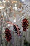 Ντεμοντέ χριστουγεννιάτικο δέντρο με τις διακοσμήσεις κώνων πεύκων που επαναφέρουν τις μνήμες παιδικής ηλικίας Στοκ εικόνα με δικαίωμα ελεύθερης χρήσης