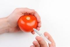 Ντομάτα ΓΤΟ με τη σύριγγα Στοκ φωτογραφία με δικαίωμα ελεύθερης χρήσης